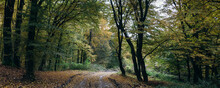 Enchanted Autumn Forest Panorama