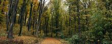 Path Through The Autumn Woods Panorama