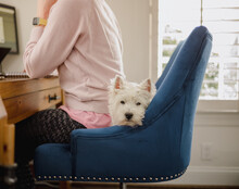 A Cute White Dog Lying Behind The Back Of A Woman Who Is Working From Home