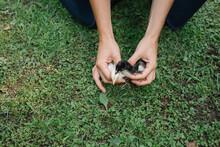 Woman Holding Chicks At Farm
