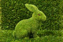 Unnoticed Grass Rabbit On The Grass