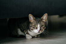 CUTE CAT HIDING UNDER COUCH Looking At Camera