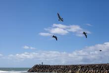 Pelicans Flying In Blue Sky Near Ocean