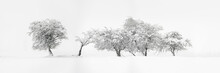 Abstract Trees Covered In Snow