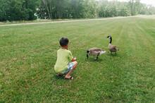 Boy At The Park Feeding Geese.