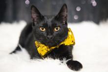 Cute Black Kitten With Yellow Eyes Wearing Bowties