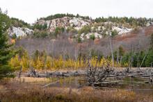 Beaver Pond With La Cloche Mountain Range White Quartzite Rock And Larch