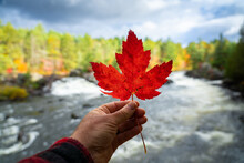 Man Holding Canadian Red Maple Leaf In Autumn