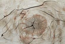 Wood Veins