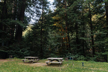 Two Wooden Picnic Tables Sit In The Grass In The Redwoods