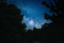 Night Sky Through The Trees
