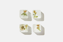 Ice Cubes With White Flowers And Green Leaves