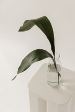 Two Green Leaves In Vase