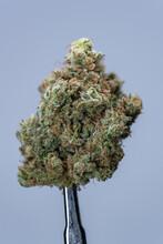 Cannabis Flower Macro - Strain: Megafauna