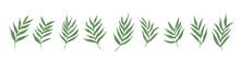 手描きタッチの南国風葉っぱの1列に並んだセットイラスト vector Botanical Illustration Elements. Hand Drawn Drawing Sketch.  Collection Of Greenery Leaf Plant Forest Herbs