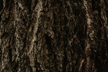 Tree Bark Forest Texture