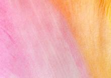 Tulip Petal Background
