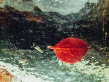 Still Life, Red Leaf On A Transparent Plate.