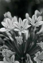 Beautiful Flowers In Black And White