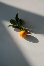 Tangerine 02
