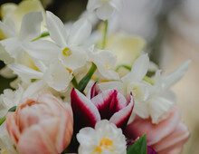 Daffodils And Tulips Together In Bouquet