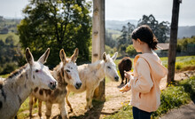 Girl With Donkeys Outdoors