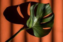 Monstera Plant Leaf On Orange Background