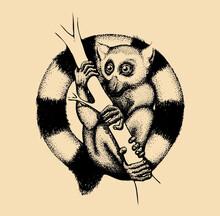 Hand Drawn Lemur Illustration