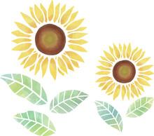 水彩風 淡い黄色の2輪のヒマワリの花 ベクター