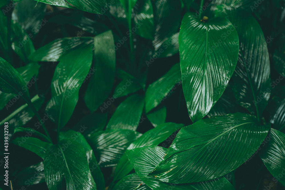 tropical forest natural background, nature scene in green tone style, concept of relax and freedom lifestyle using for spa and travel.