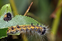 Selective Focus Shot Of A Hairy Caterpillar On Green Leaf