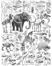 Paleontology - Jurassic Period - Animal Fossils And Skeletons Collection - Vintage Engraved Illustration From Larousse Du Xxe Siècle