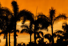 Tropical Palm Silhouettes Against A Bright-orange Sky During Sunset On Warm Summer Evening.