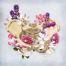 Floral Pelvis