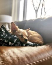 Sweet, Sleeping Dog