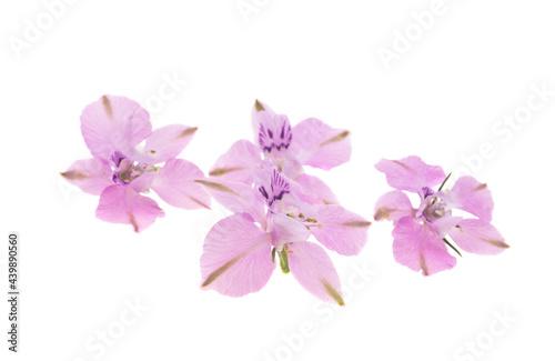 Foto perennial delphinium flower