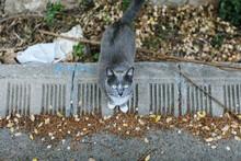 Stray Cat In Park