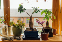 Home Office Growing Plants
