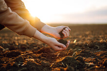Farmer Holding Soil In Hands Close-up. Male Hands Touching Soil On The Field. Farmer Is Checking Soil Quality Before Sowing Wheat. Agriculture, Gardening Or Ecology Concept