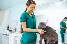 Young Woman Veterinarian Examining Cat On Table In Veterinary Clinic. Specialist With Stethoscope Listen To Kitten Heart Beat, Patient Lung. Medicine For Domestic Animal.