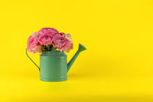 A Bouquet Of Pink Ranunculus Flowers In A Turquoise Watering Can On A Yellow Background
