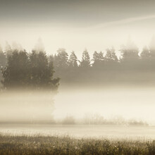 Golden Country Field And Deciduous Forest In A Clouds Of Morning Fog At Sunrise. Tree Silhouettes In The Background. Warm Sunlight. Idyllic Rural Scene