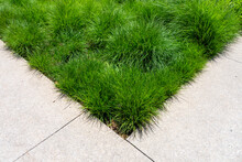 Tufted Ornamental Grasses Are A Low Maintenance Alternative To A Traditional Lawn.