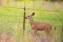 Deer Crossing Fence