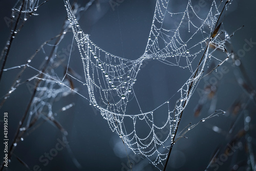Tela Close up abstract art macro photography of cobweb or spiderweb with rain or dew water drops in the morning fog