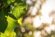 Natürlicher Hintergrund eines Blattes im Sonnenschein zum Thema Umwelt mit Textfreiraum