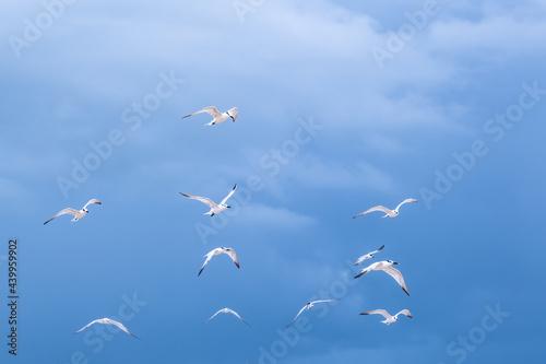 Obraz na plátně Beautiful shot of seagulls flying on background of the cloudy blue sky