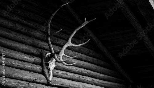 Fotografia Grayscale shot of deer antlers on the wooden wall