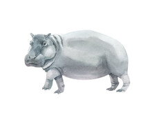 Watercolor Grey Hippopotamus Isolated On White Background. Hand Drawn Realistic Illustration