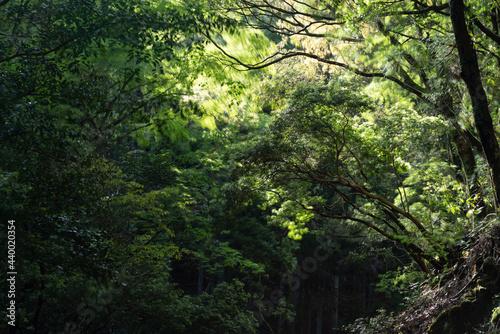 Fotografiet 風に揺れる木々